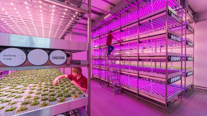 Horticulture LED Solutions