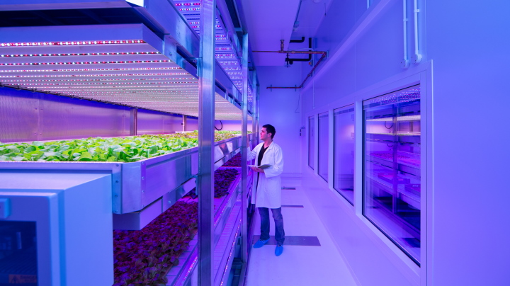 LED grow lights for strawberries produced sweeter fruit at GrowWise Center