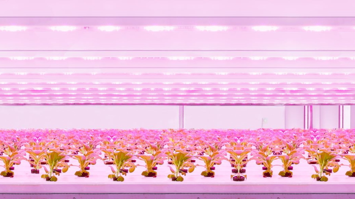 GreenPowerLED production module Static vertical farming lighting