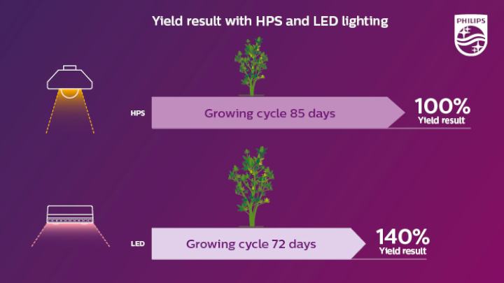 A shorter growth cycle, yet 40% higher yield with LED