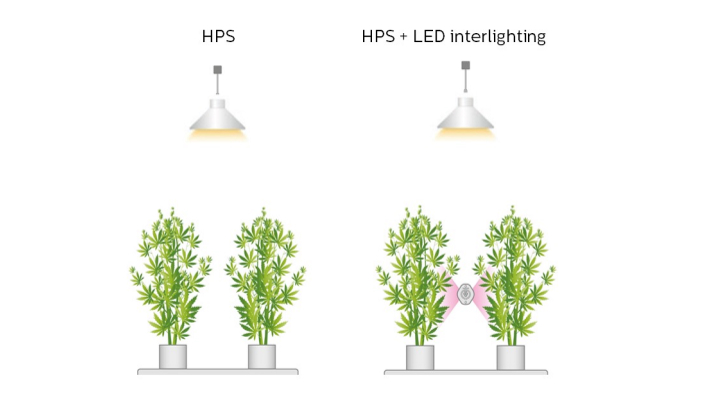 HPS + LED intercanopy lighting